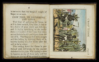 """Text on the left page, under the heading """"Crop Time, or Gathering the Canes,"""" with illustration on the right, showing enslaved persons cut and gather cane."""